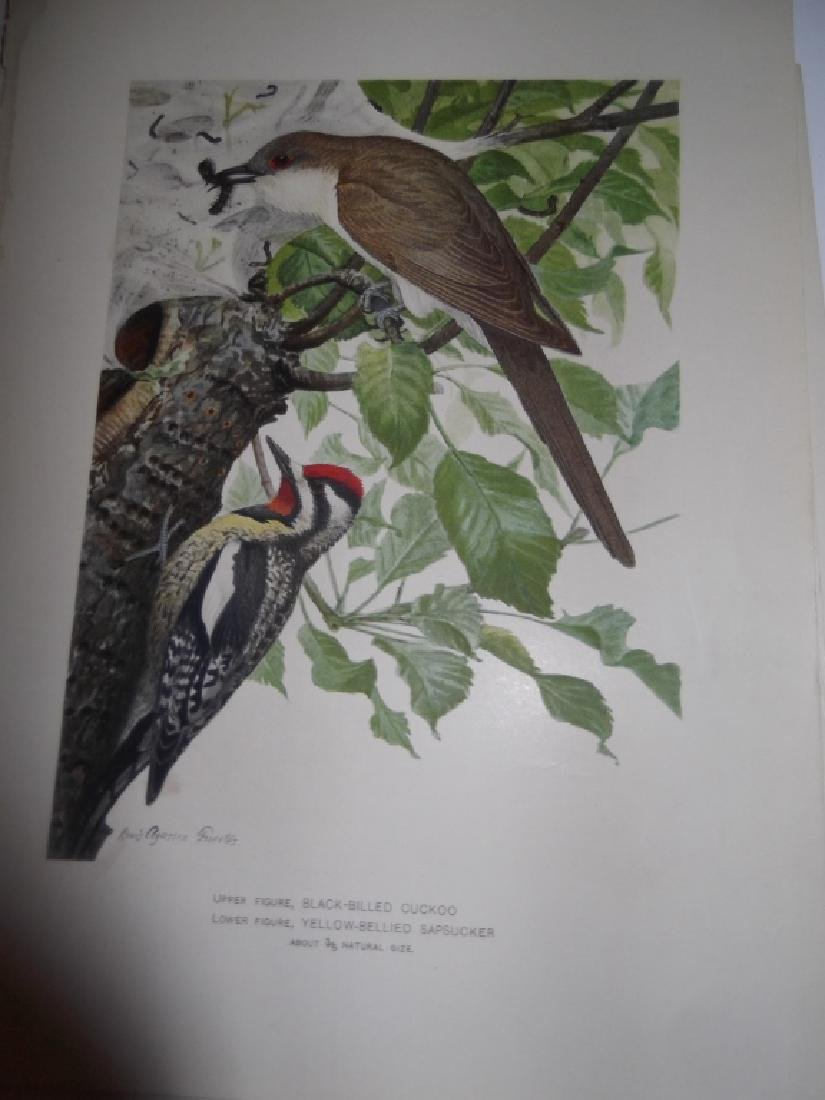 30 bird & animal  lithographs - 3