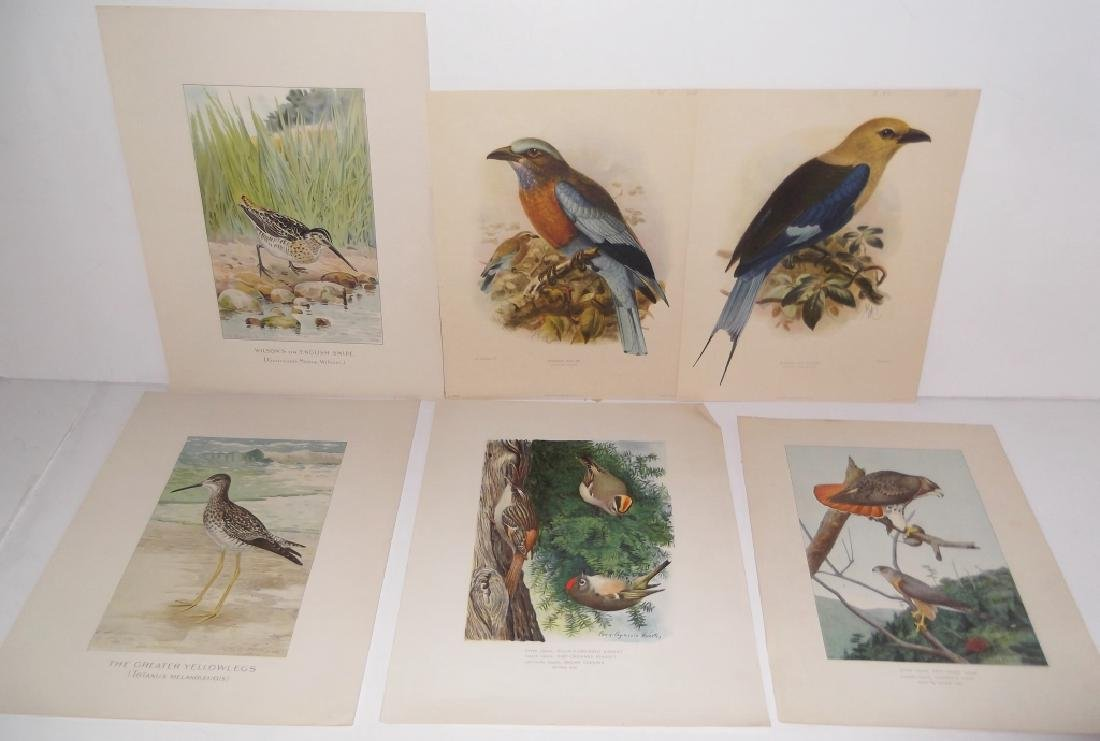 30 bird & animal  lithographs - 5