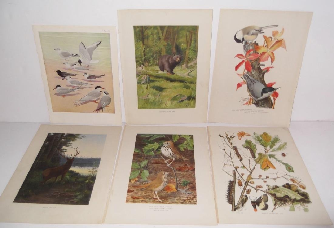 30 bird & animal  lithographs - 6