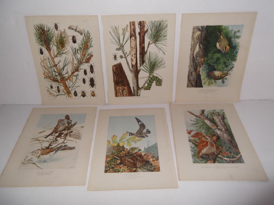 30 bird & animal  lithographs - 7