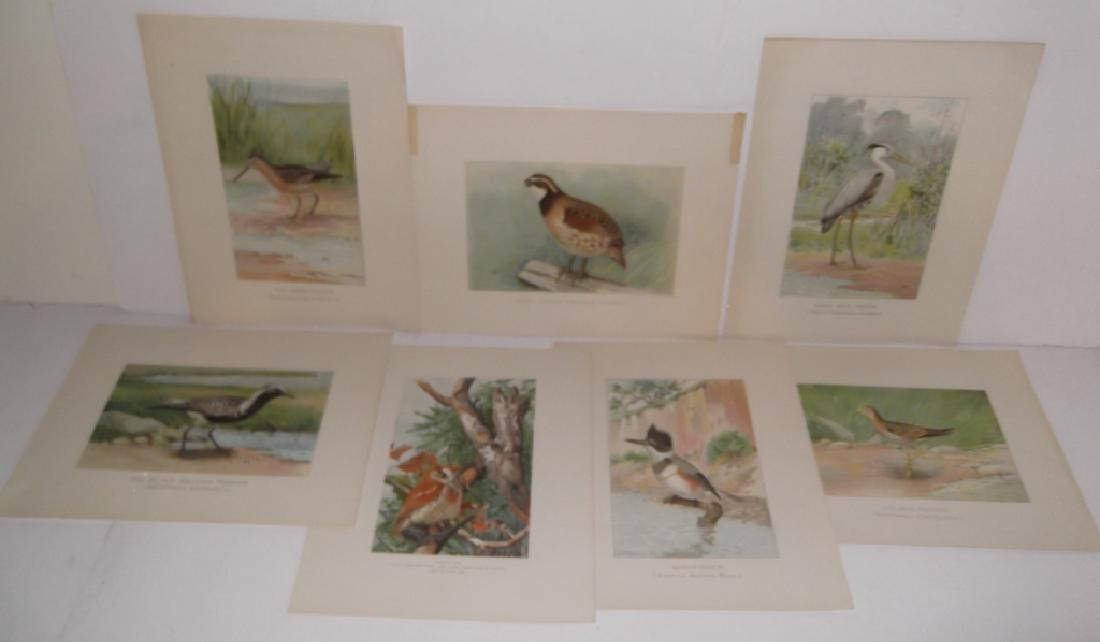 30 bird & animal  lithographs - 9