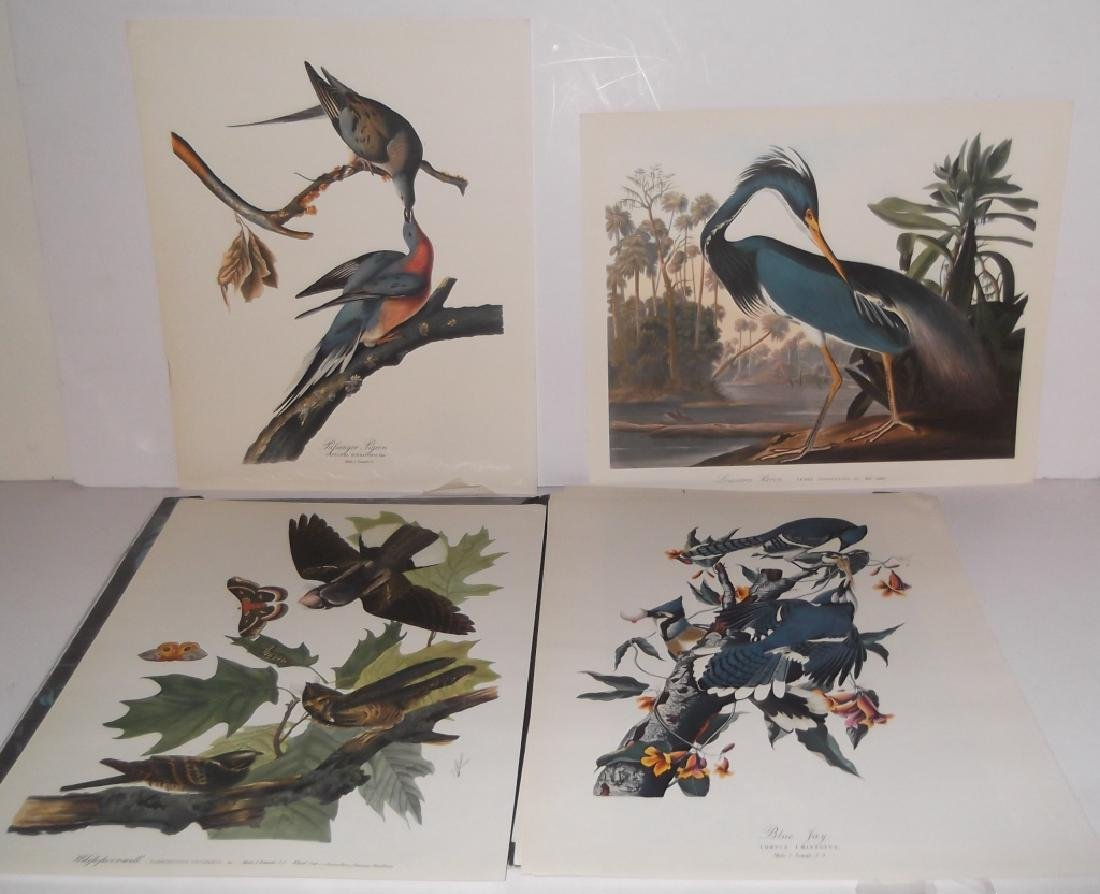 1964 The Audubon Portfolio - 10