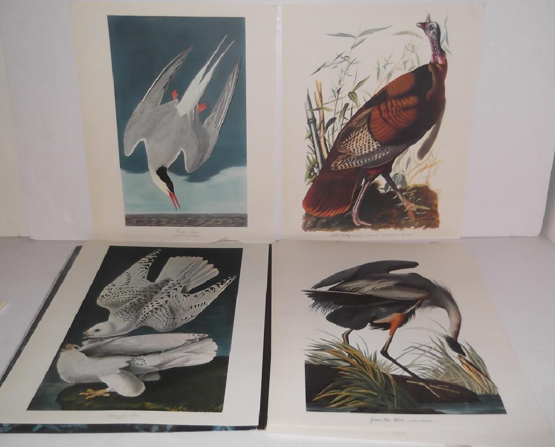 1964 The Audubon Portfolio - 2