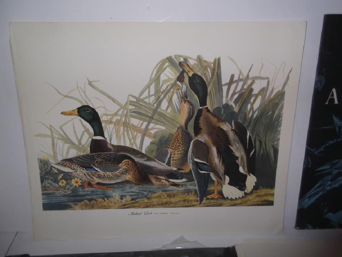 1964 The Audubon Portfolio - 5