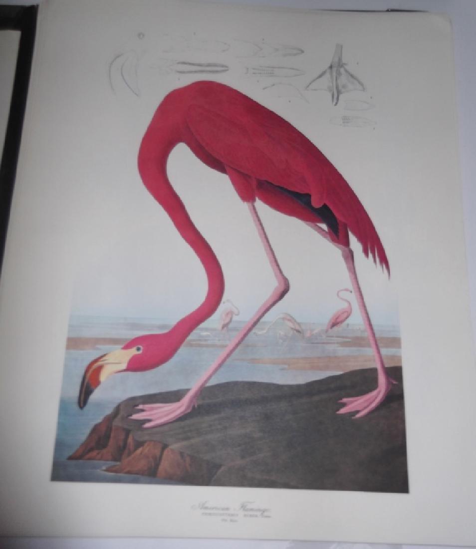 1964 The Audubon Portfolio - 6
