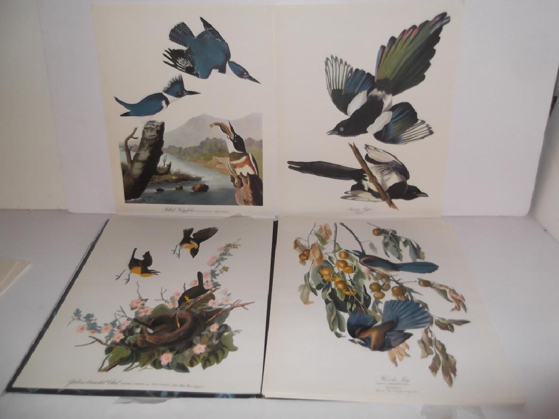 1964 The Audubon Portfolio - 9