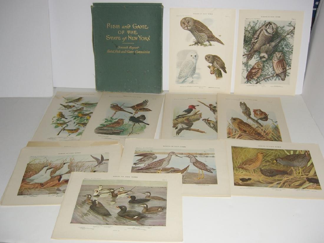 93 Birds of New York  lithographs