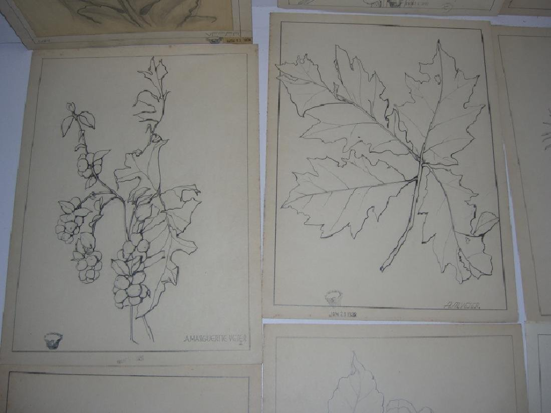 12 1930's original floral illustration drawings - 7