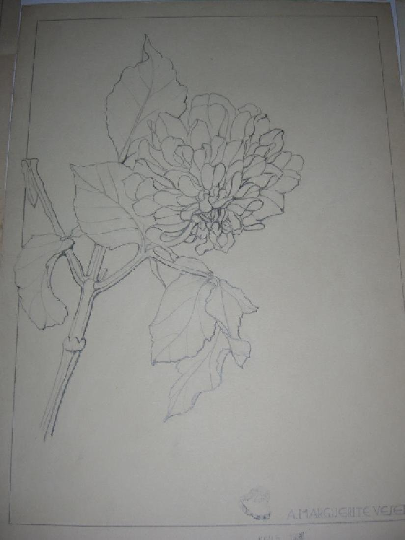 12 1930's original floral illustration drawings - 9