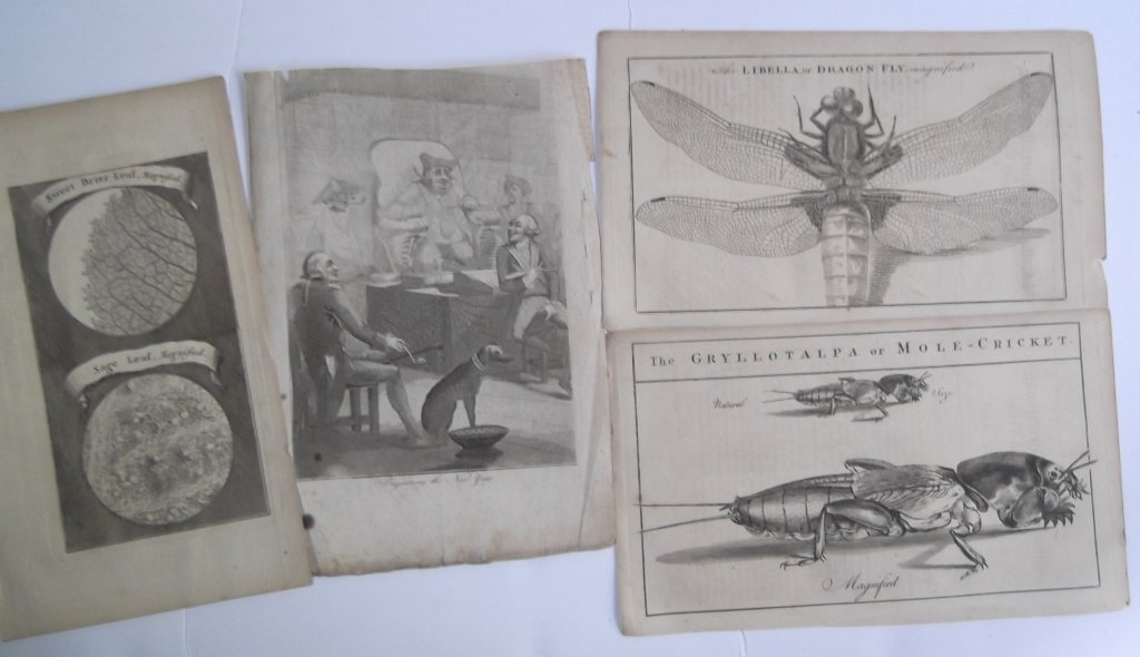 Collection of 18 antique book plate engravings - 5