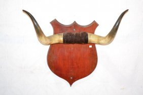 Cow Horns Mounted On Wood Plaque