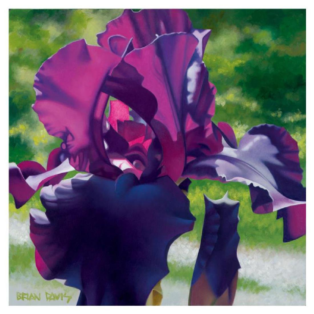 "Brian Davis - ""Passionate Purple Iris"" Limited Edition"