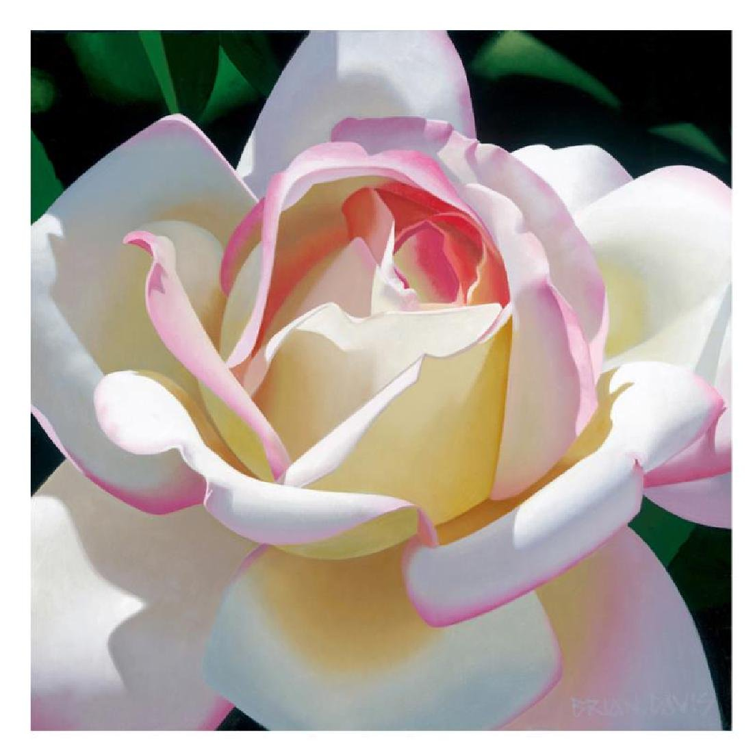"Brian Davis - ""Single Cherry Parfait Rose"" Limited"