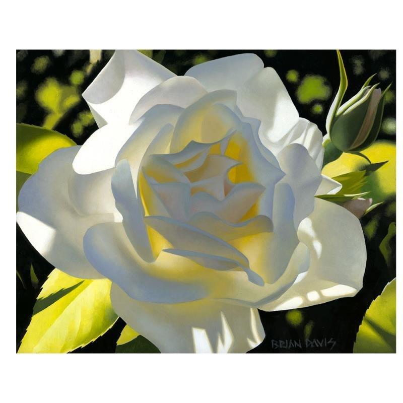 "Brian Davis - ""Divine White Rose"" Limited Edition"