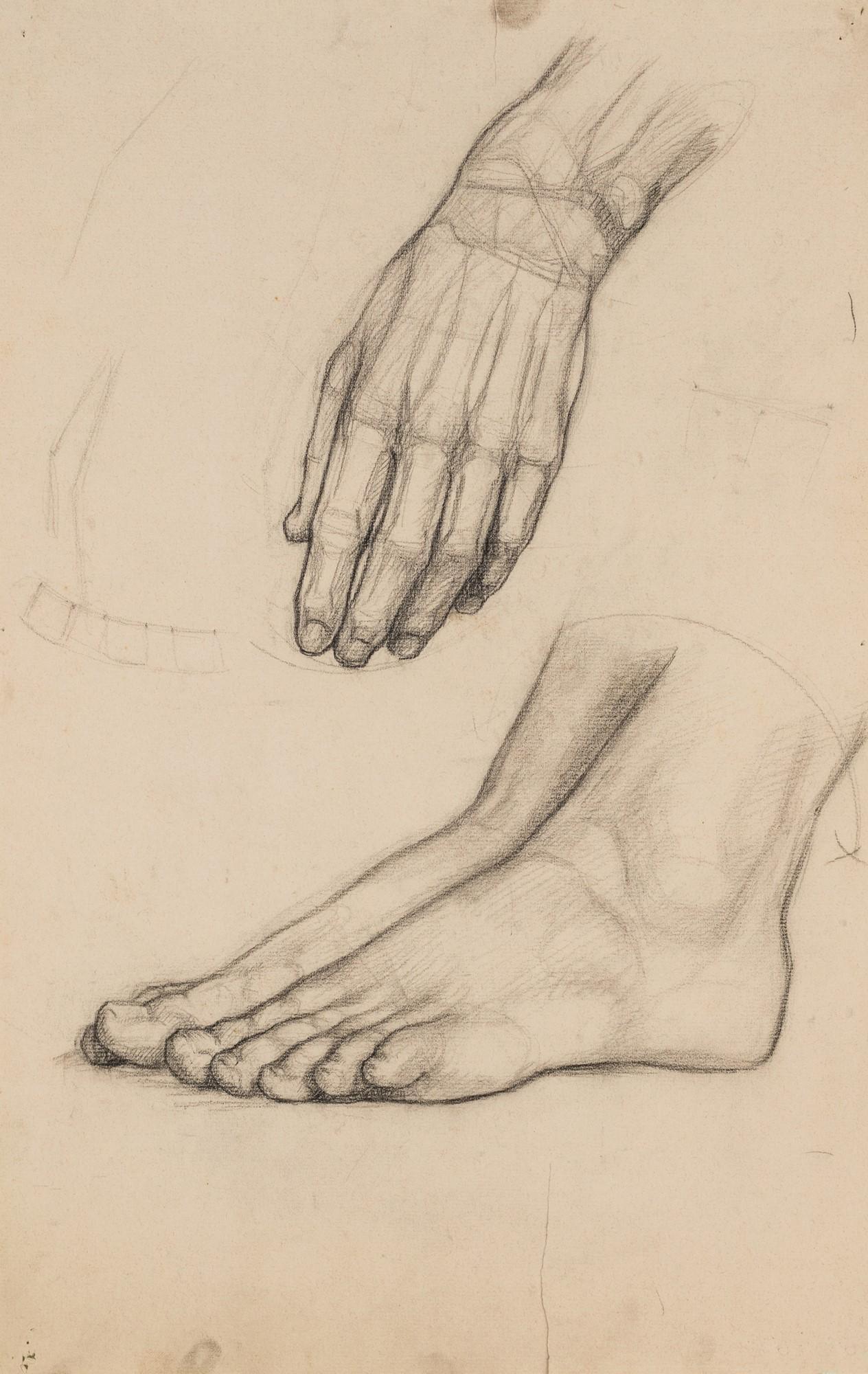 Nineteen drawings depicting studies on human anatomy
