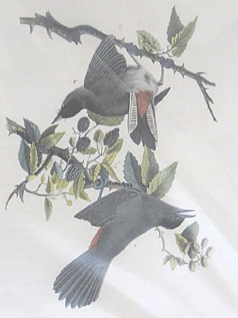 Audubon . Cat Bird . Octavo Plate 140