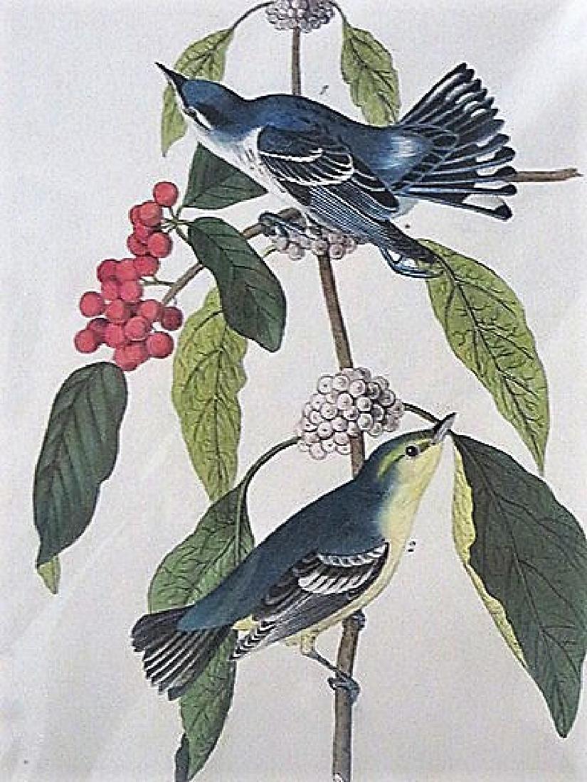 Audubon. Carulean Wood Warbler . Plate 86