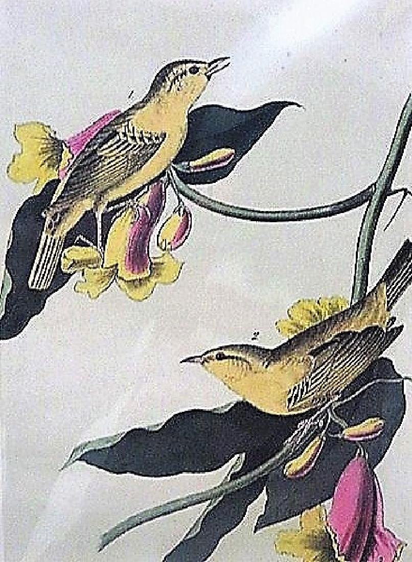 Audubon  Rathbones Wood Warbler. Plate 89
