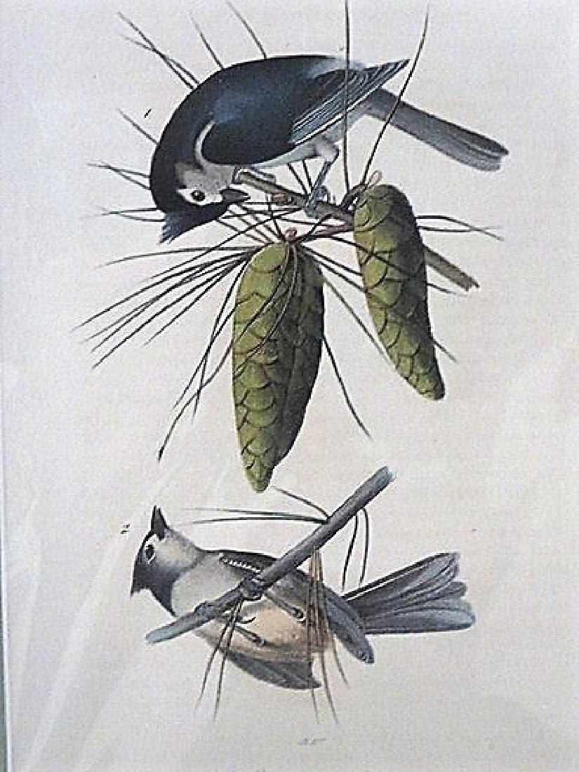 Audubon. Crested Titmouse. Plate 125