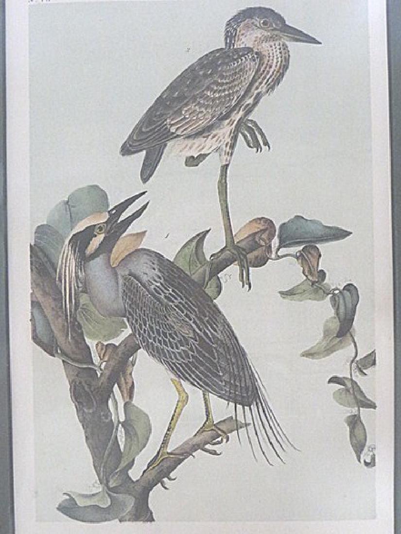 Audubon. Yellow Crowned Wren. Plate 364