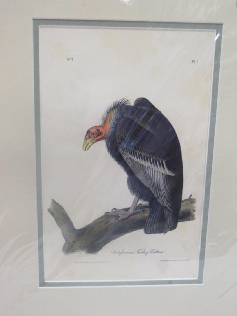 J.J. Audubon (1785-1851). Californian Turkey Vulture