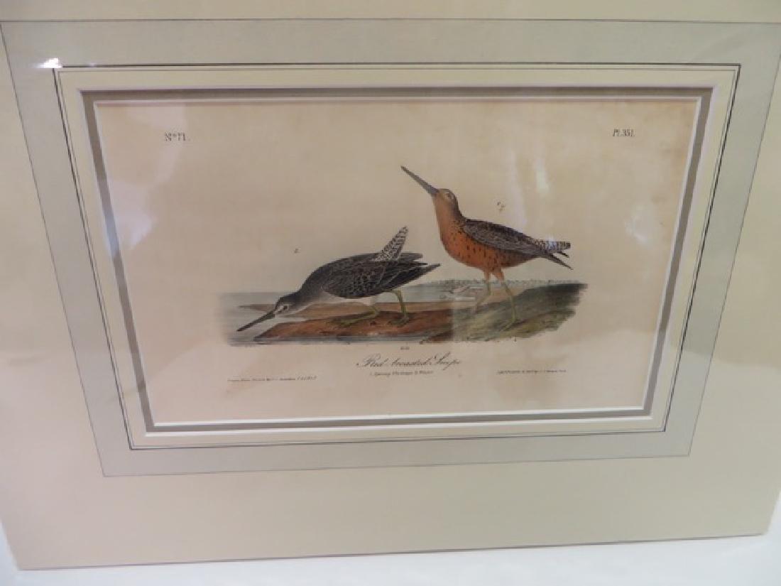 J.J. Audubon(1785-1851). Red Breasted Snipe