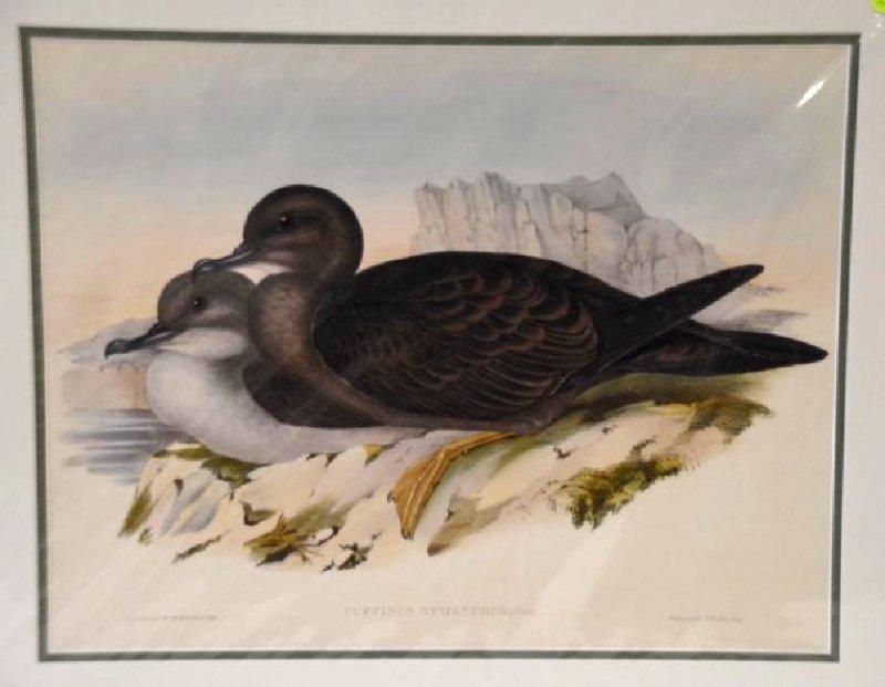 J. Gould H. C. Richter  Plate 151