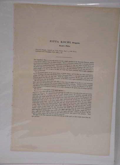 J. Gould W. Hart Pitta Kochi Plate 370 - 2