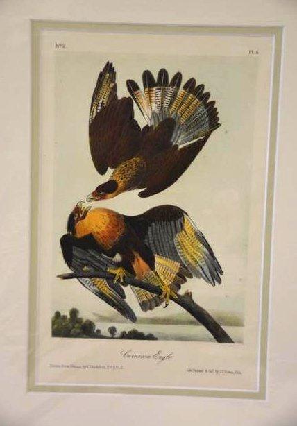 Audubon Aquatint Engraving. Plate 4