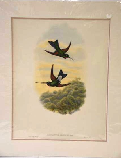 J. Gould W. Hart Hand Colored Lithograph