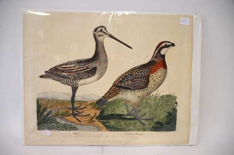 A. Wilson. Hand Colored Plate 47
