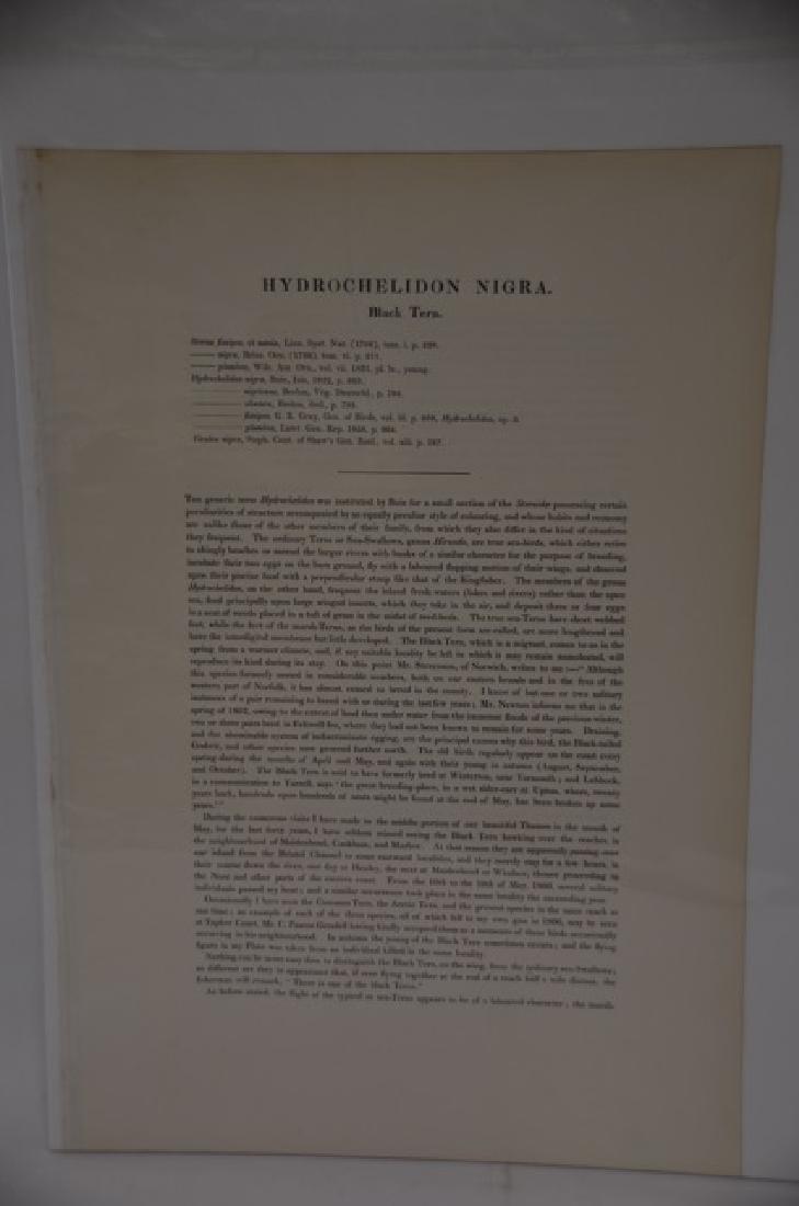 J. Gould H. C. Richter Lithograph Plate 211 - 2