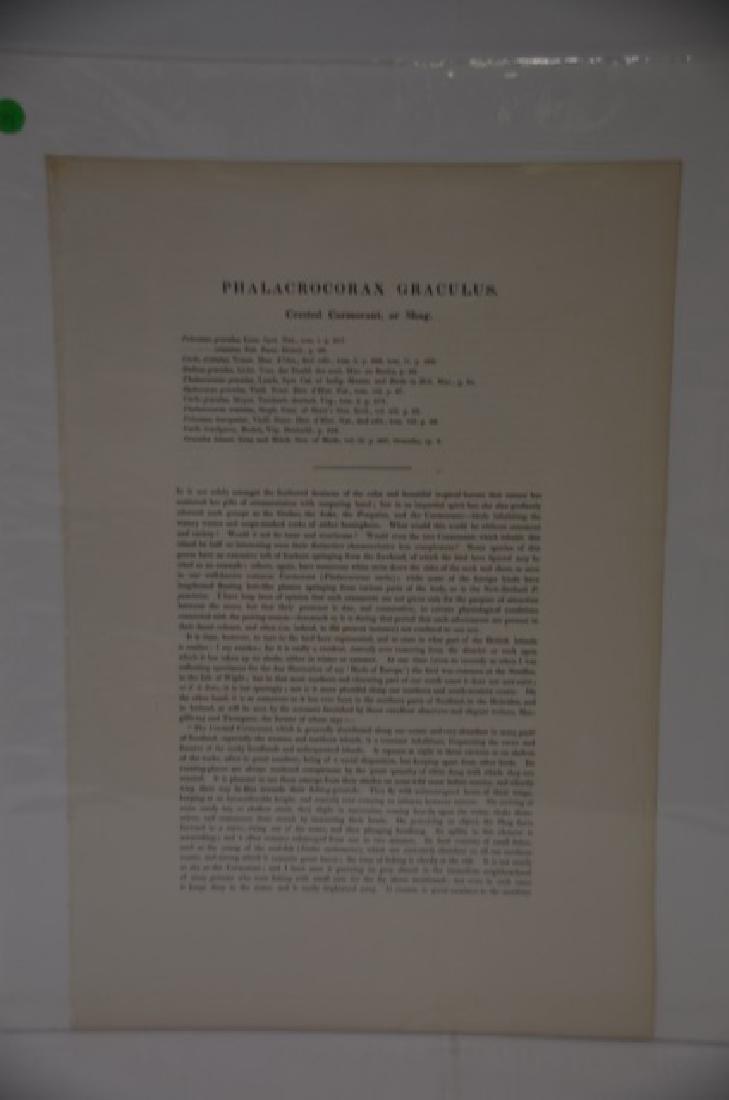 J. Gould H. C. Richter Lithograph Plate 184 - 2