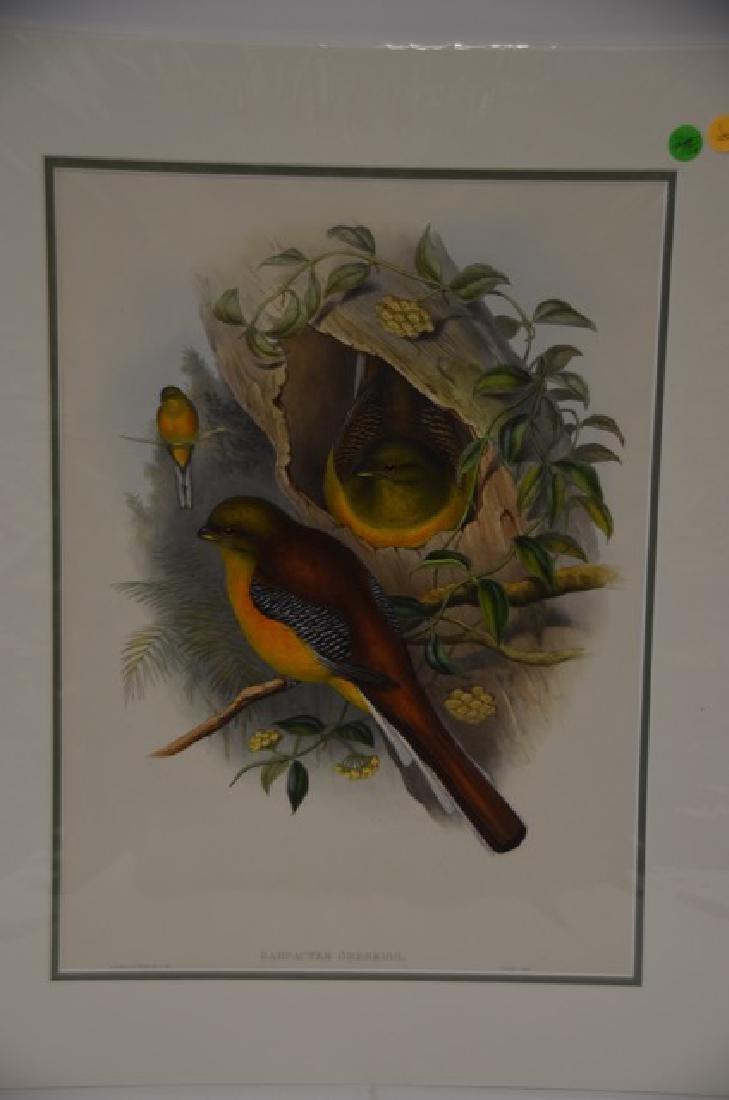 J. Gould Richter Lithograph Plate 248