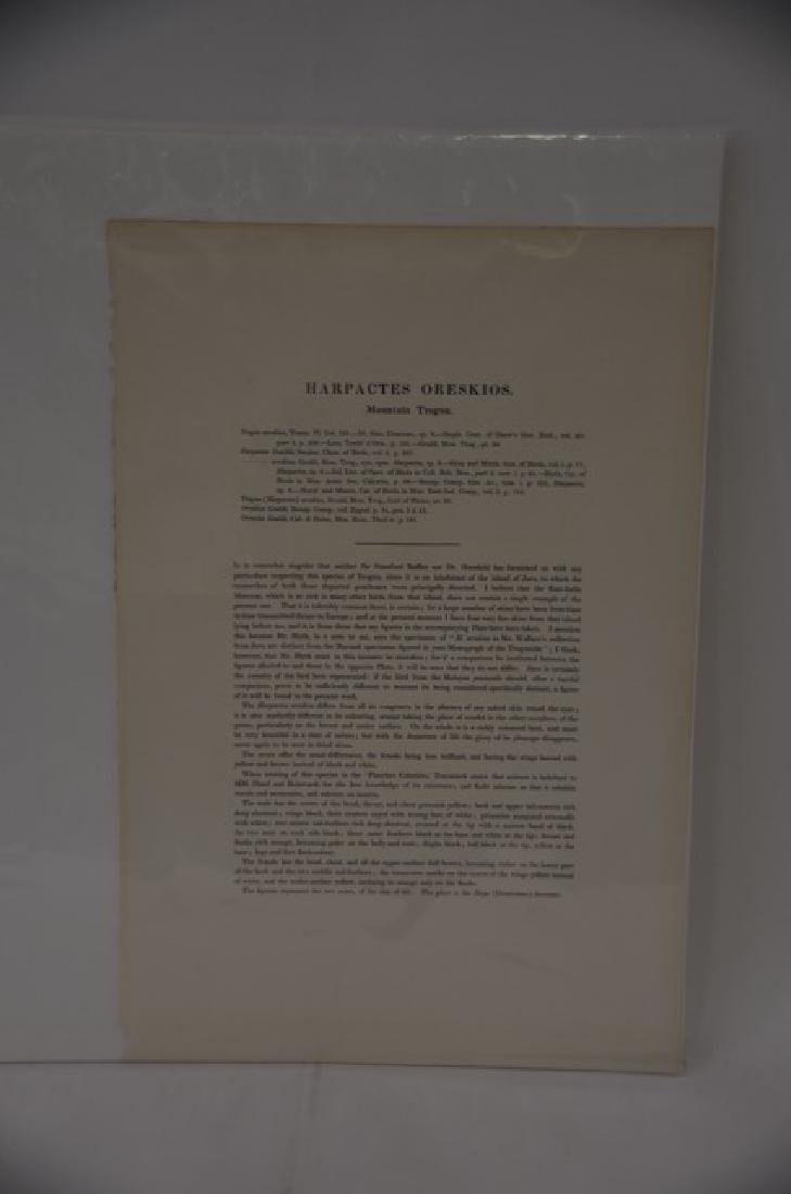 J. Gould Richter Lithograph Plate 248 - 2