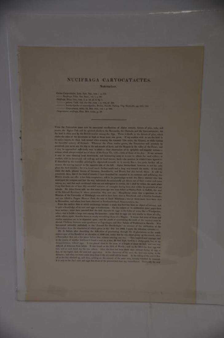 J. Gould Richter Lithograph Plate 374 - 2