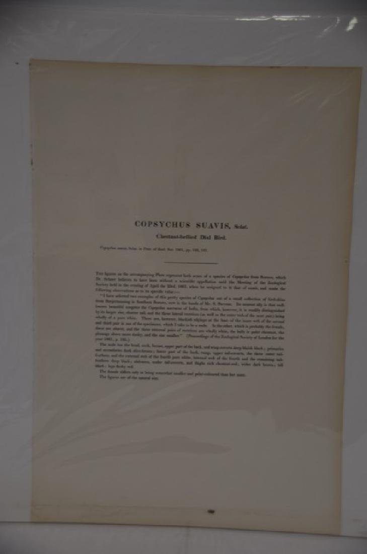 J. Gould Richter Hand Colored Lithograph - 2