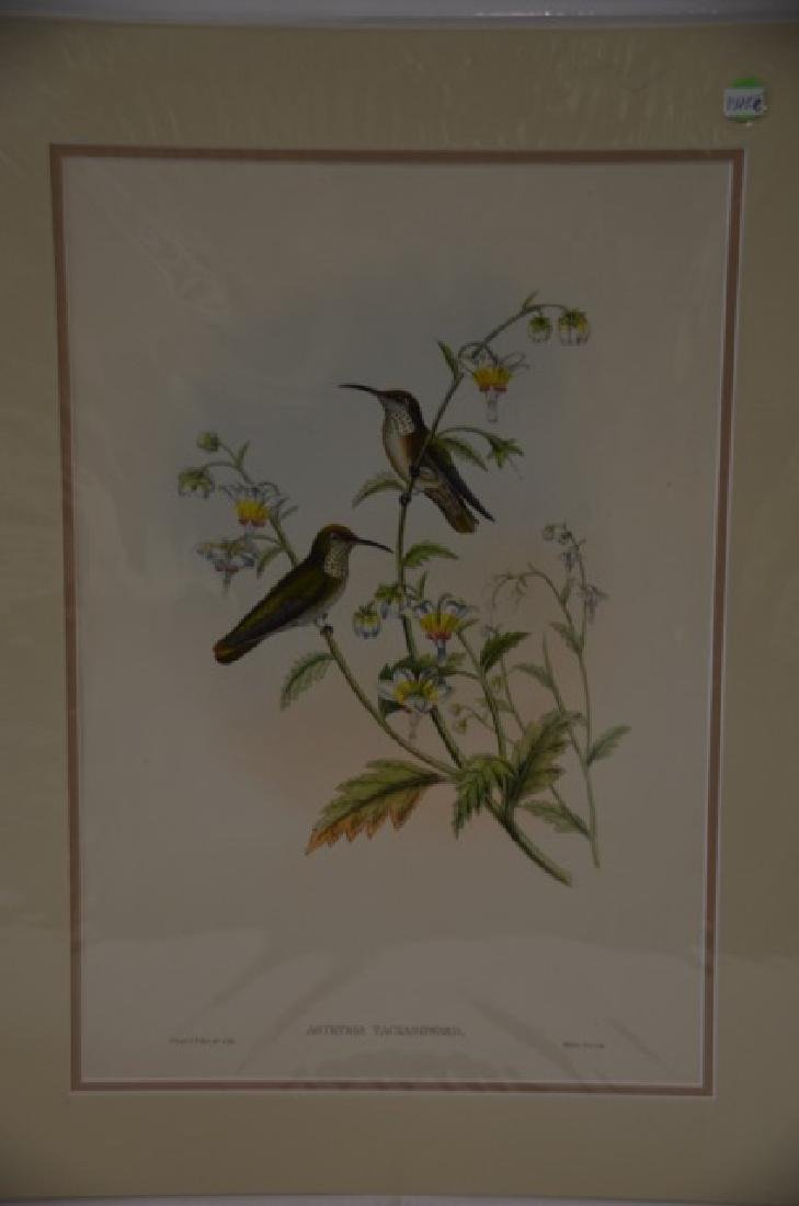 J. Gould. W. Hart Hand Colored Litho