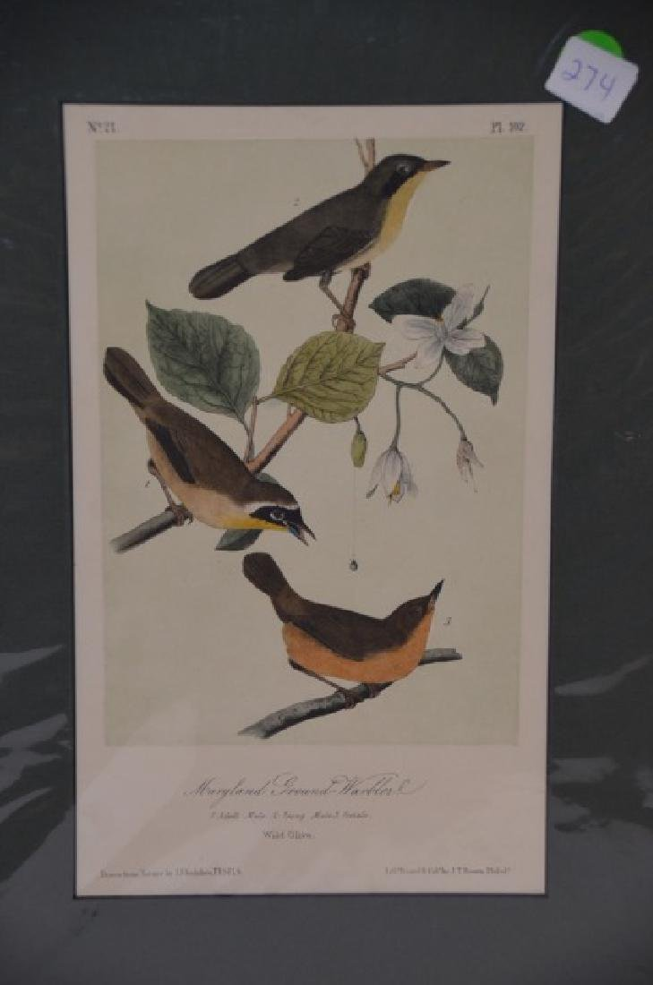 J.J. Audubon. Octavo. Maryland Ground Warbler No.102