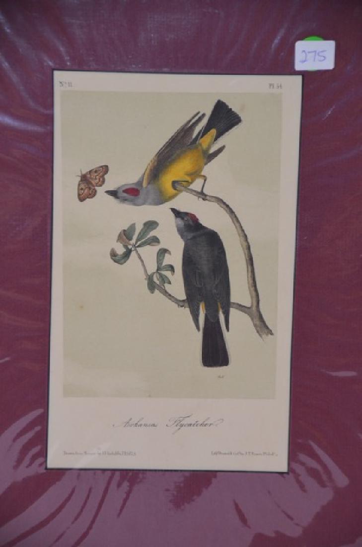 J.J. Audubon. Octavo. Arkansas Flycatcher No.54