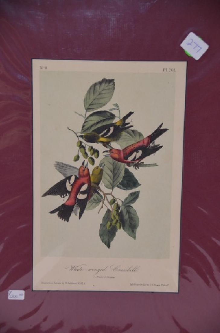 J.J. Audubon. Octavo. White Winged Grossbill No.201