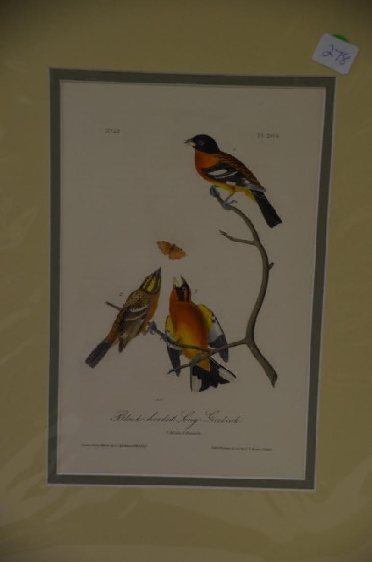 J.J. Audubon. Octavo. Black-Headed Long-Grosbeak No.206