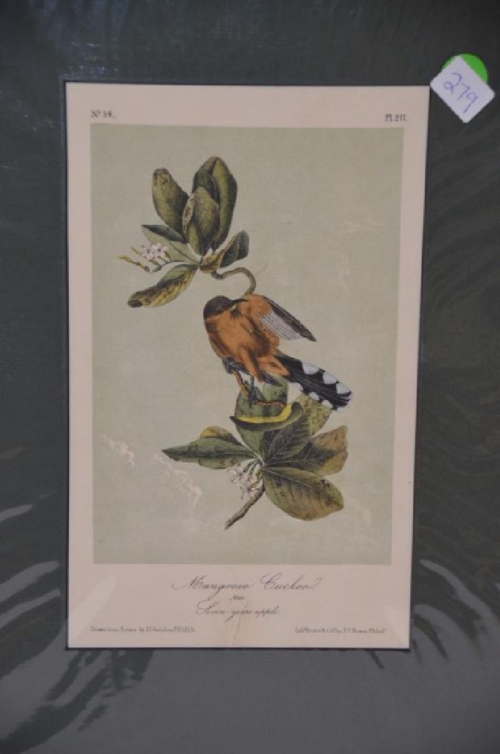 J.J. Audubon. Octavo. Mangrove Cuckoo No.277