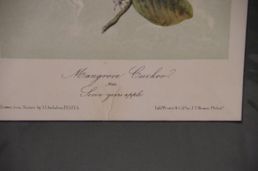 J.J. Audubon. Octavo. Mangrove Cuckoo No.277 - 2