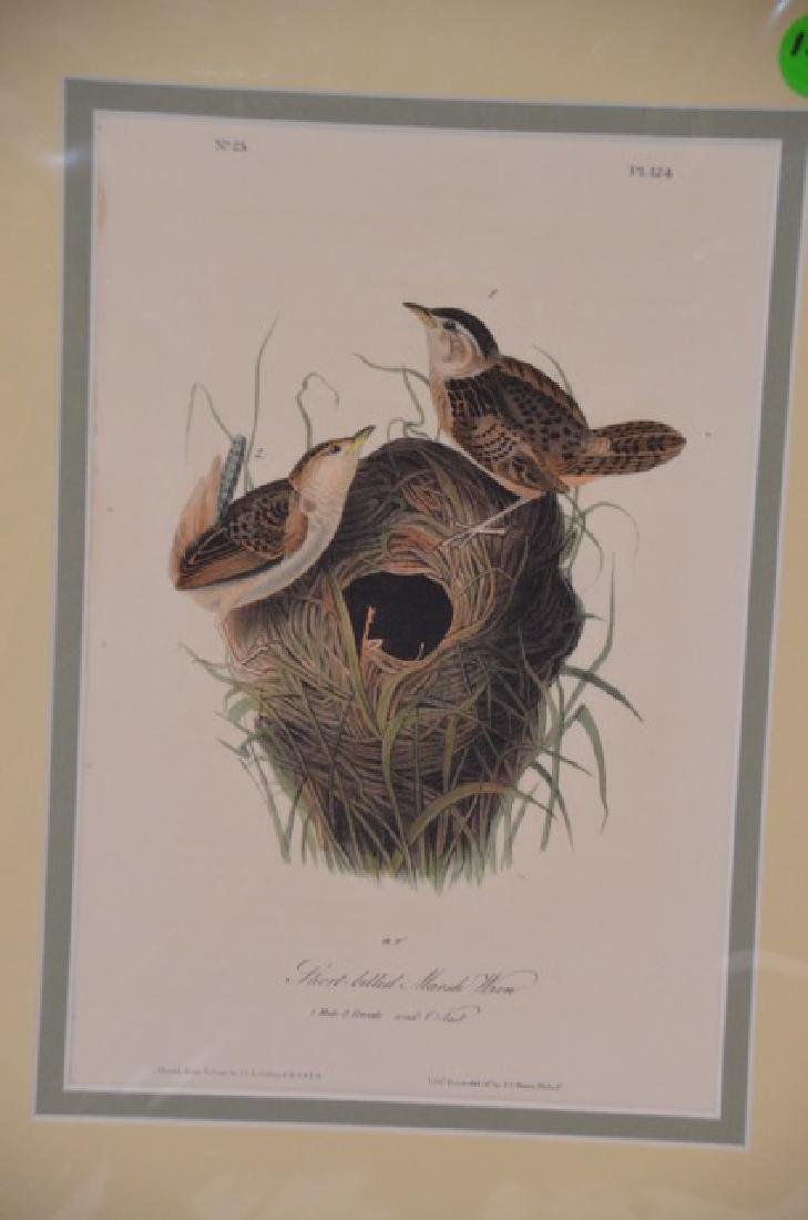 J.J. Audubon. Octavo. Short Billed Marsh Wren