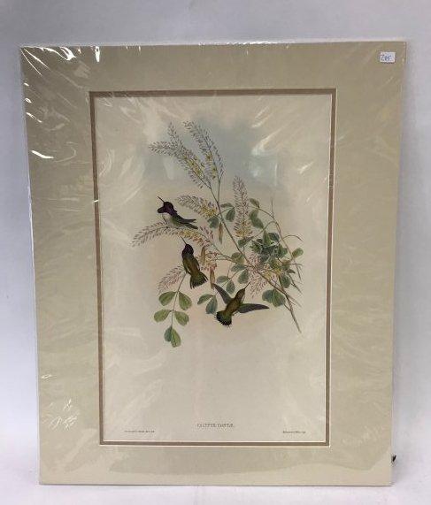 J. Gould. Richter Hand Colored Lithogaph