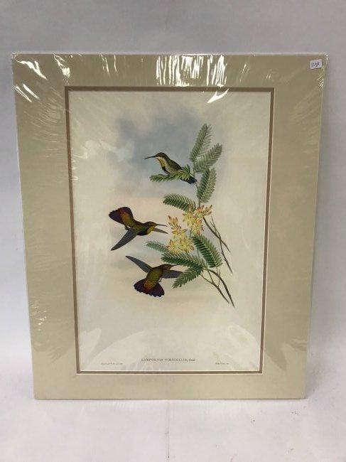 J. Gould H. C. Richter St. Thomas's Mango