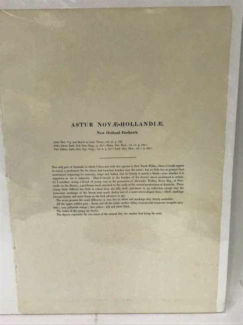J. Gould H. C. Richter. New Holland Goshawk - 2