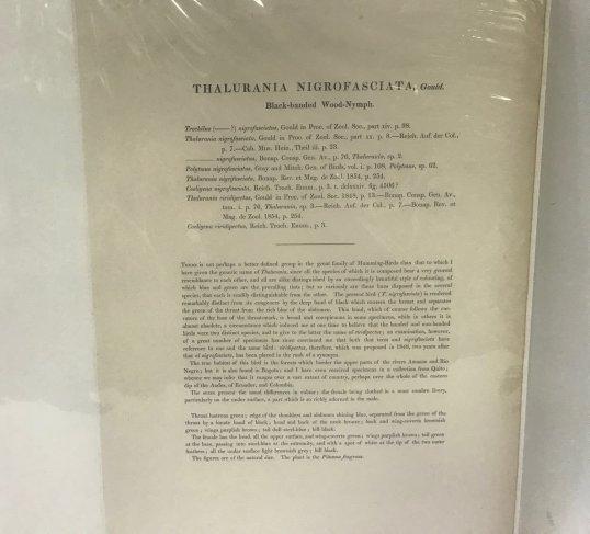 J.Gould Lithograph w/ Text - 2