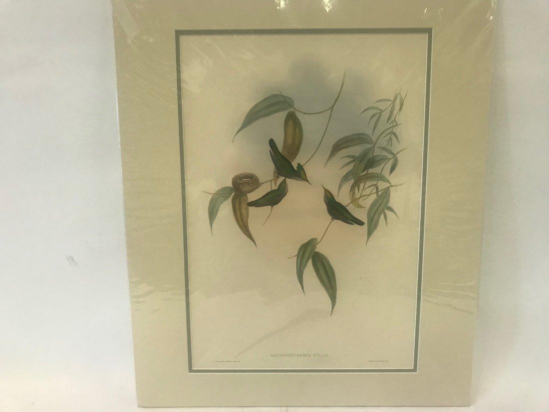 J.Gould H.C.Richter. Gilt-Crest Lithograph